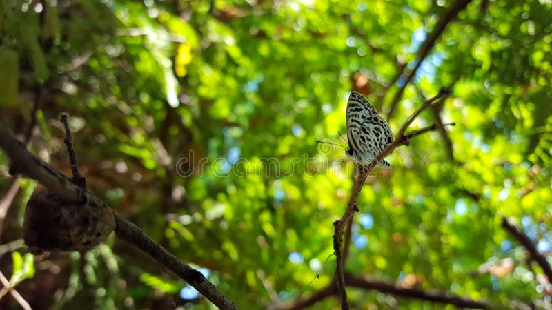 Farfalla sola fotografie stock