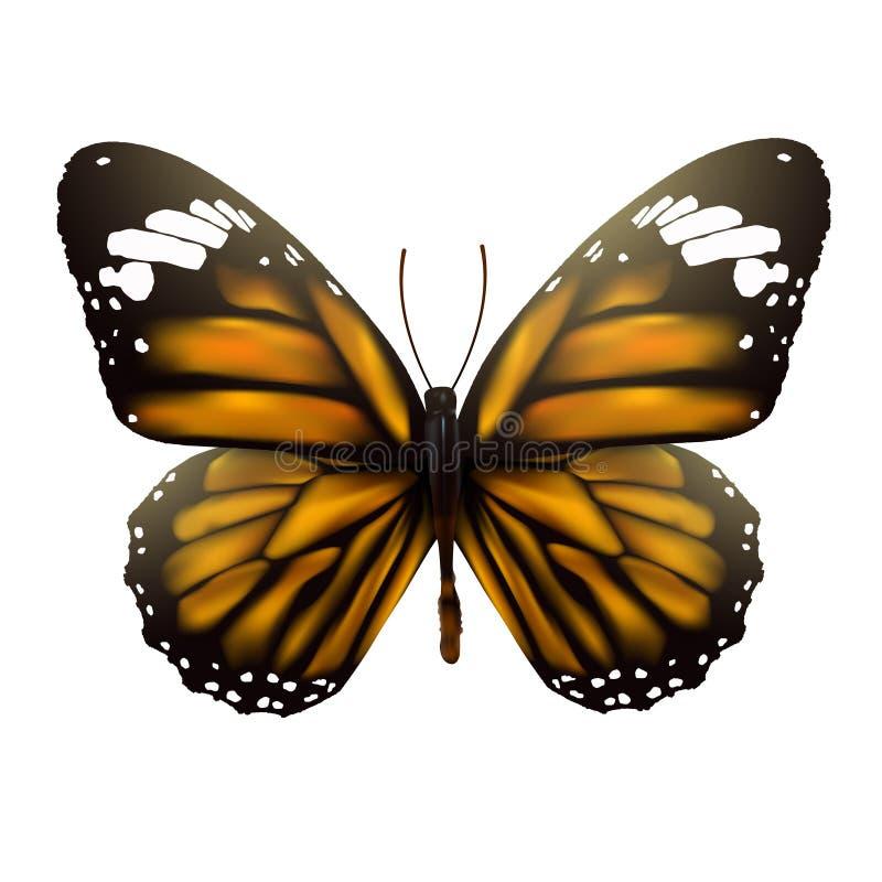 Farfalla su priorità bassa bianca illustrazione vettoriale
