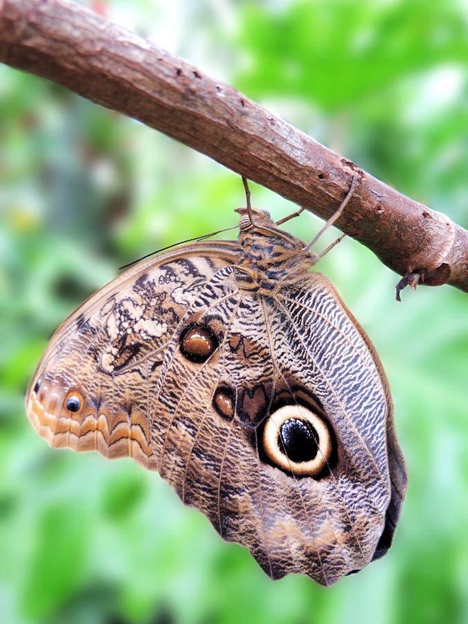 Farfalla su un albero fotografia stock libera da diritti