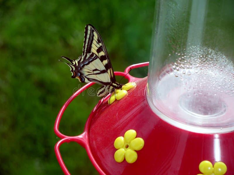 Farfalla su un alimentatore del colibrì immagini stock