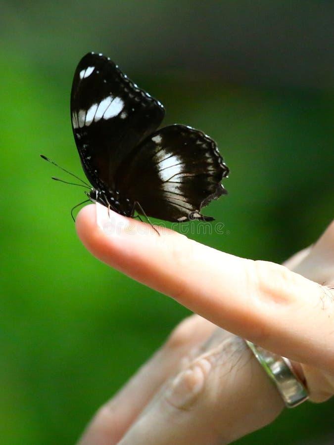 Farfalla su un dito immagine stock libera da diritti