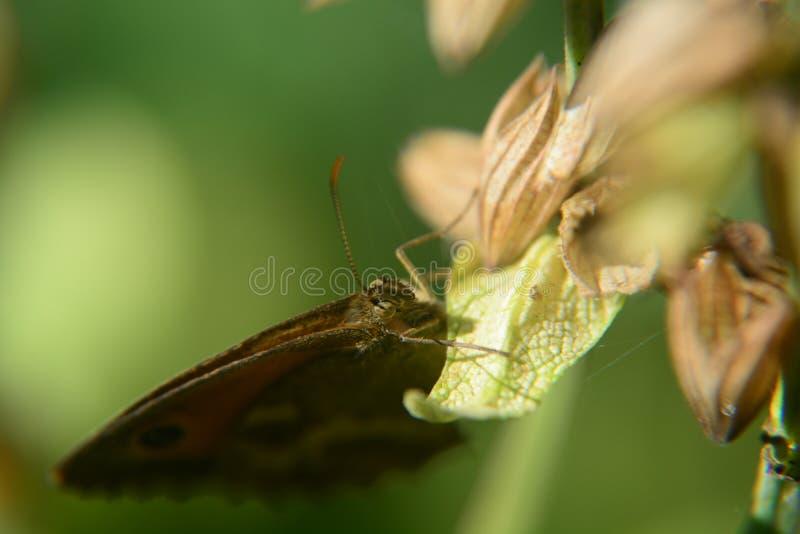 Farfalla su un fiore fotografia stock