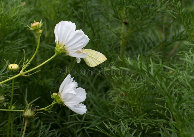 Farfalla su un fiore immagini stock libere da diritti