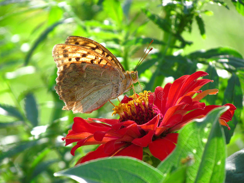 Farfalla su un fiore immagini stock