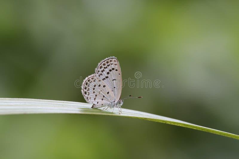 Farfalla su una foglia in Hong Kong immagini stock libere da diritti
