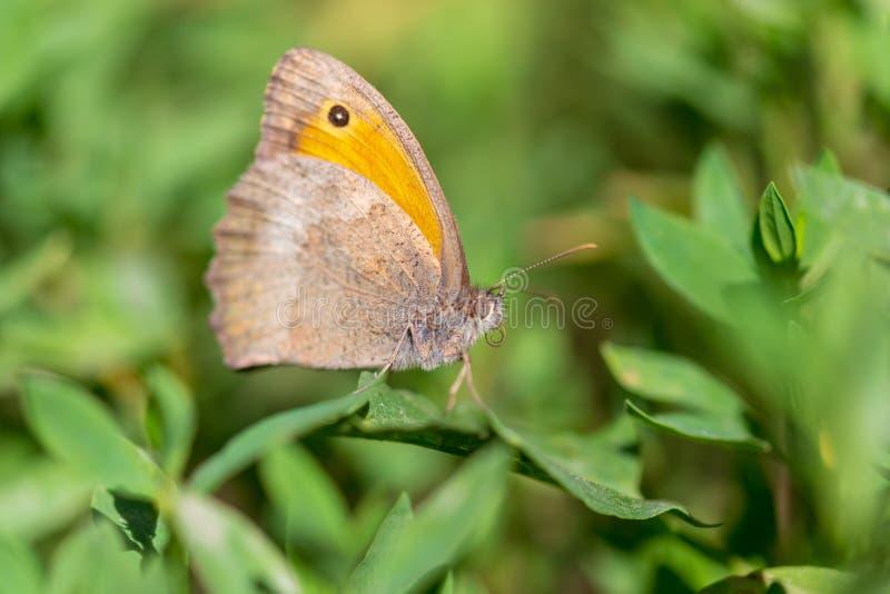 Farfalla su una foglia verde in natura fotografia stock