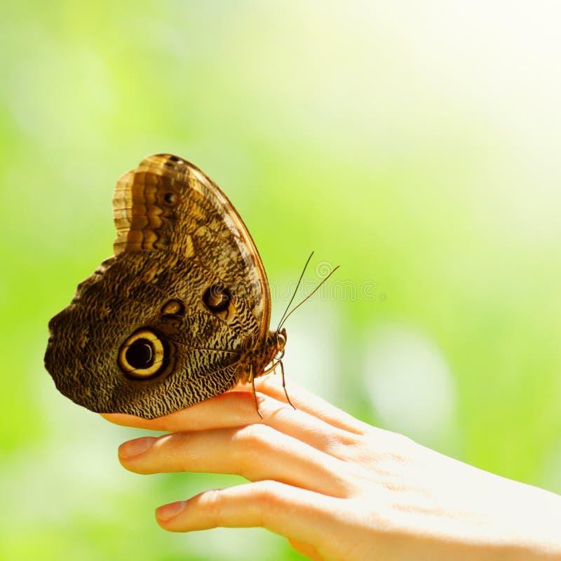 Farfalla su una mano femminile immagini stock