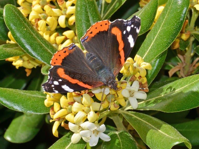Farfalla sui fiori fotografia stock libera da diritti