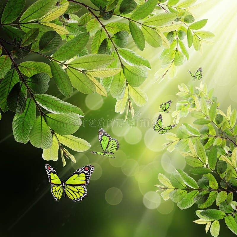 Farfalla sui precedenti dei fogli della sorgente fotografie stock libere da diritti