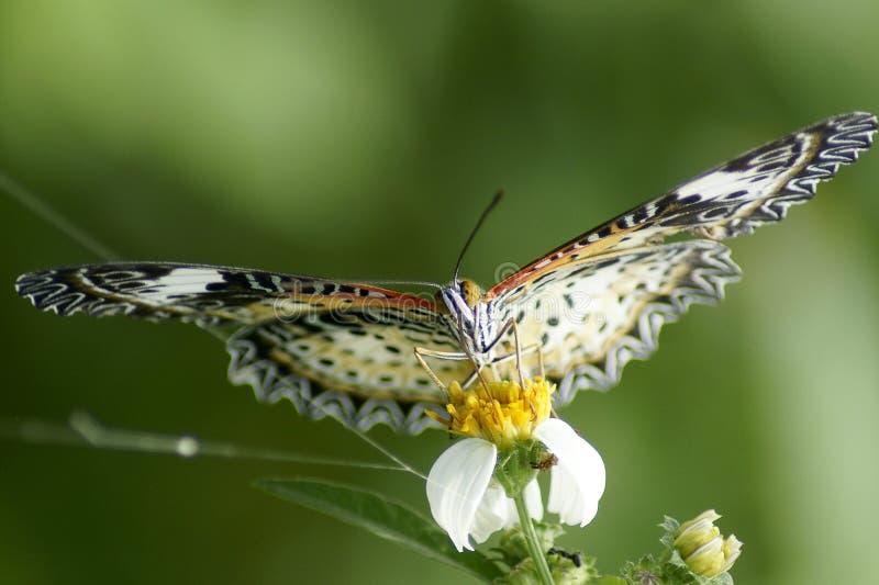 Farfalla sui precedenti verdi fotografia stock libera da diritti