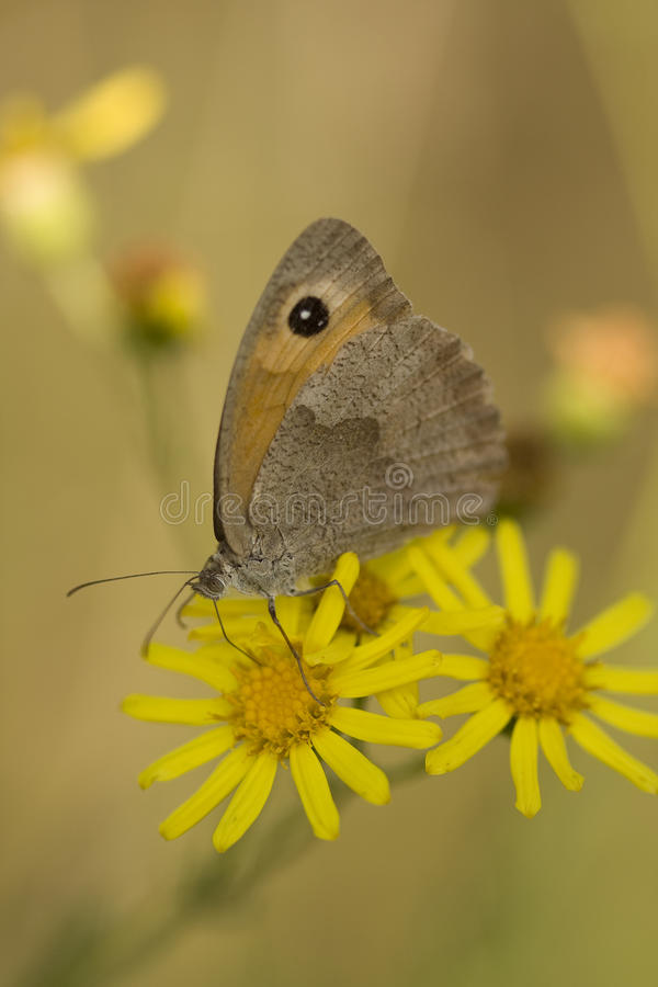 Farfalla sul fiore fotografie stock libere da diritti