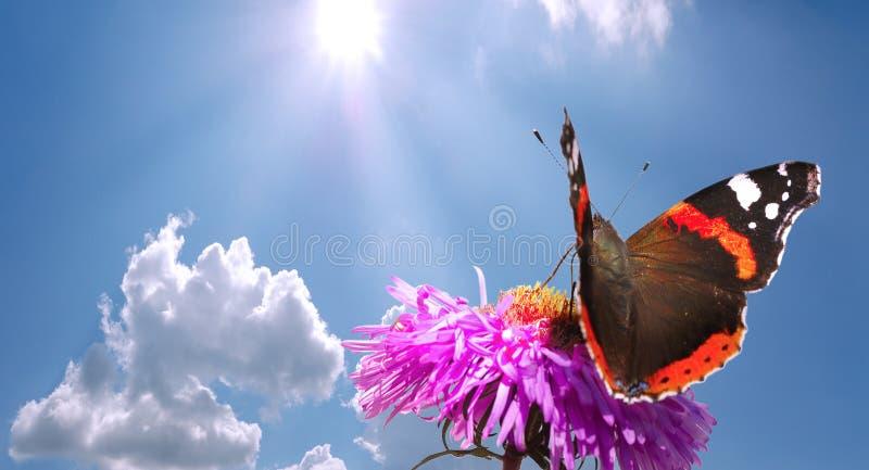 Farfalla sul fiore contro il cielo immagine stock libera da diritti