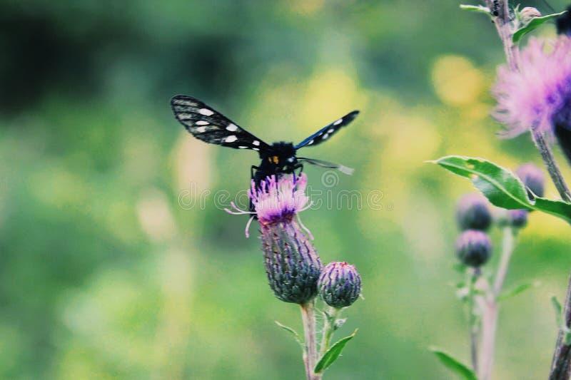 Farfalla sul fiore immagine stock libera da diritti