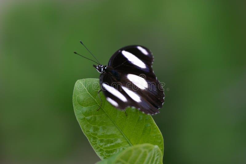 Farfalla Sul Foglio Fotografia Stock
