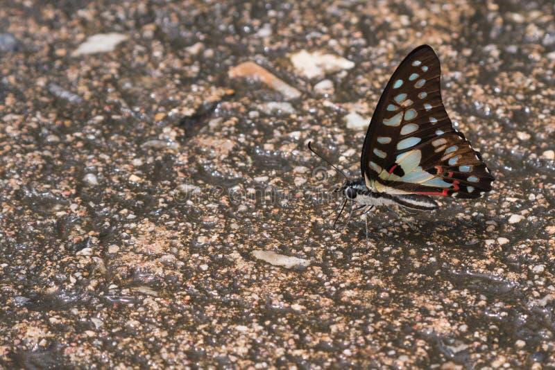 Farfalla sul pavimento immagini stock libere da diritti