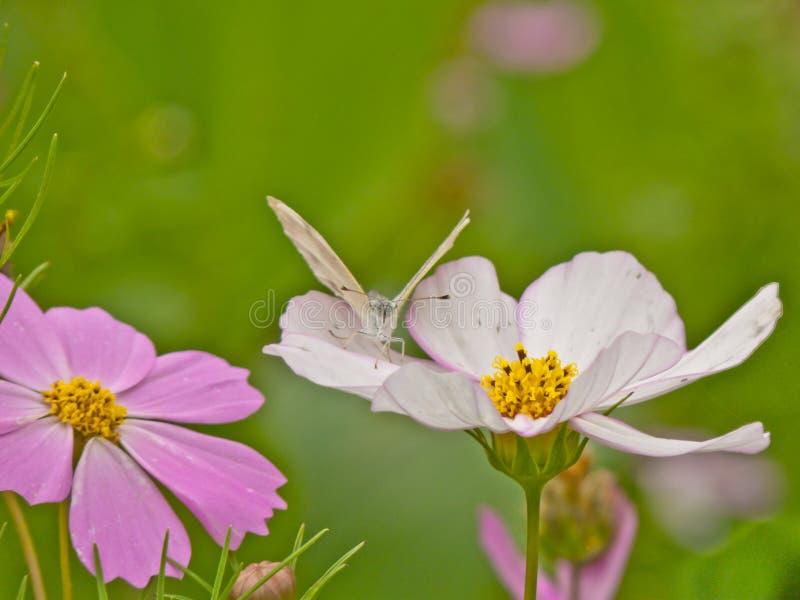 Farfalla sul petalo del fiore fotografia stock