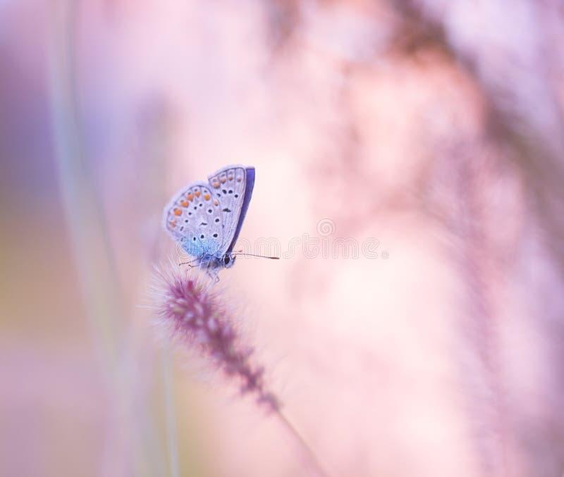Farfalla sul wildflower immagini stock