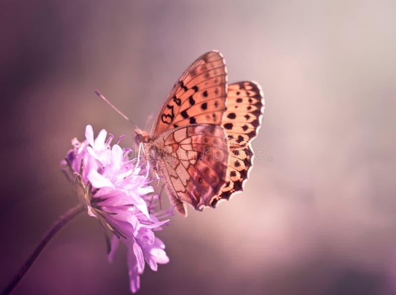 Farfalla sul wildflower immagini stock libere da diritti