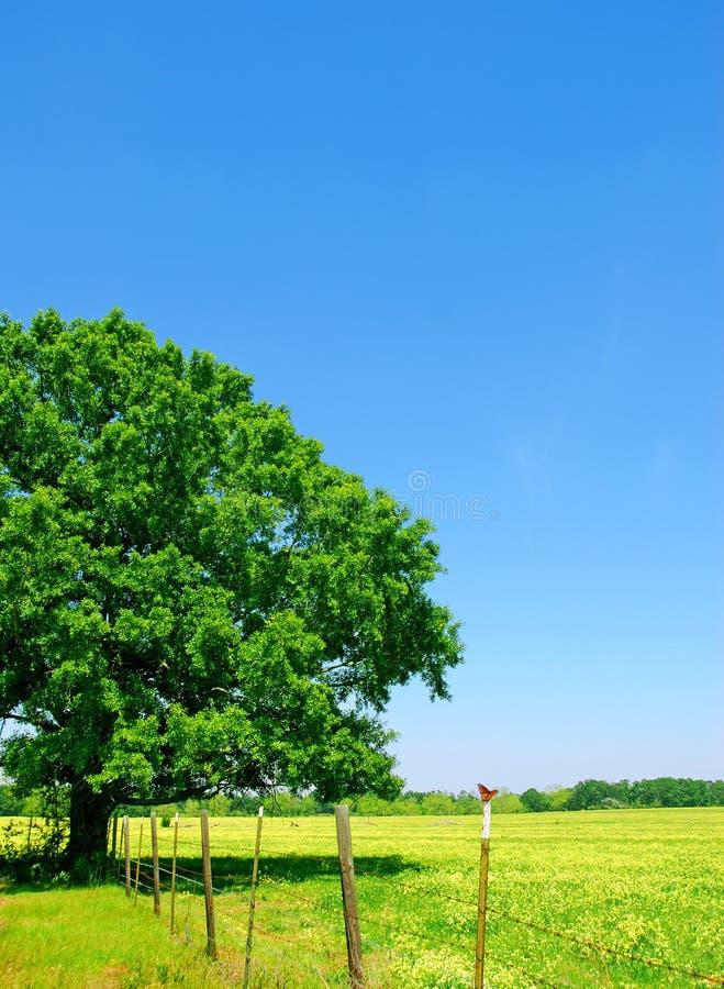 Farfalla sull'alberino della rete fissa fotografie stock