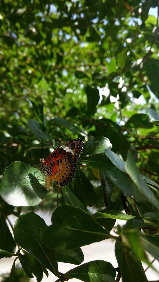 Farfalla sull'albero fotografie stock