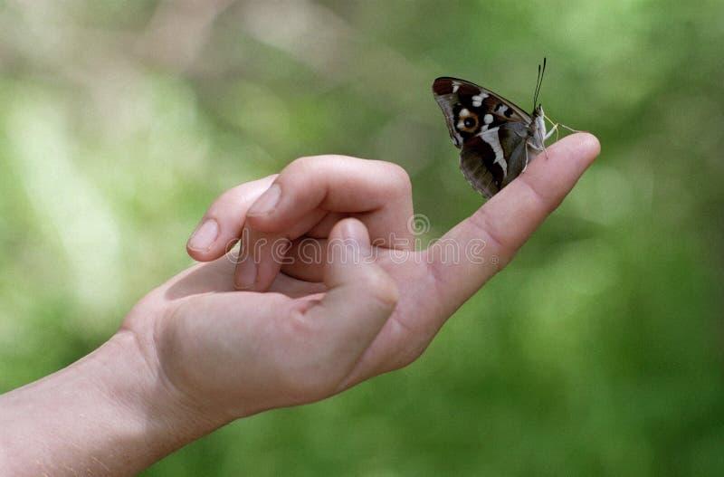 Farfalla sulla barretta fotografia stock libera da diritti