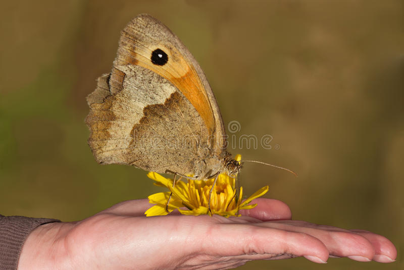 Farfalla sulla fine della mano della donna su fotografia stock