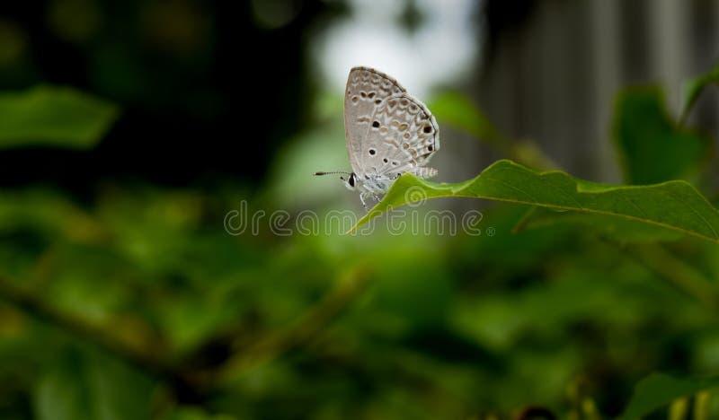 Farfalla sulla foglia immagine stock