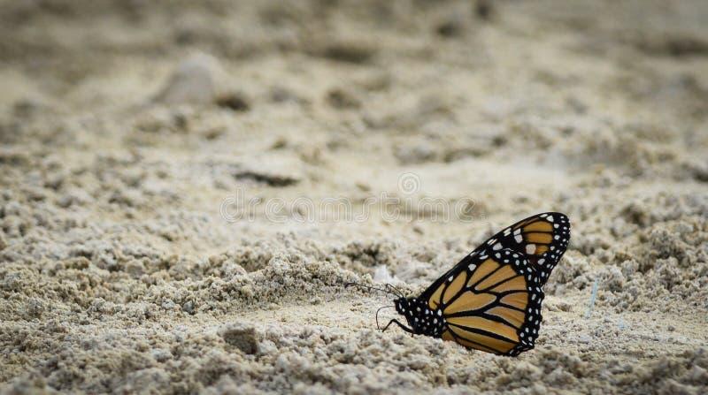 Farfalla sulla spiaggia immagine stock libera da diritti