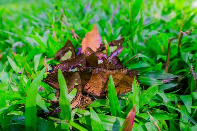 Farfalla sulla terra fotografia stock