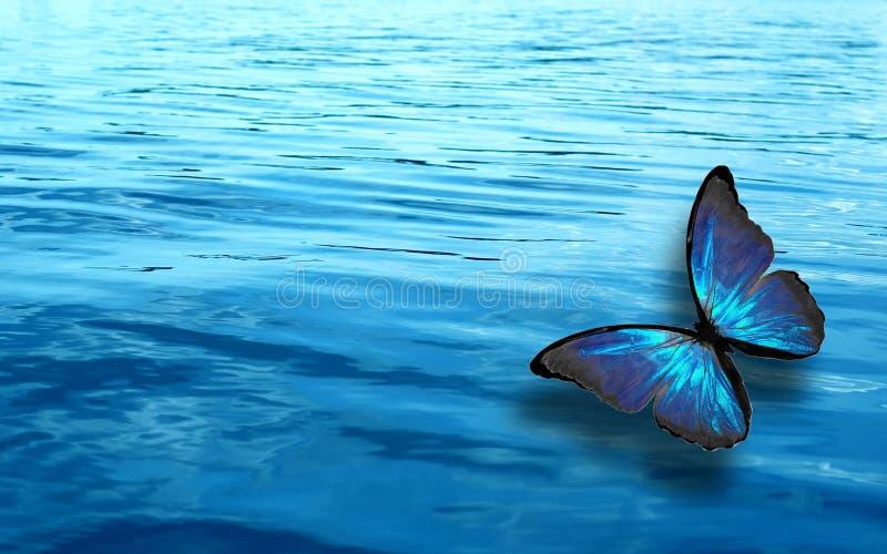 Farfalla tropicale colorata su un fondo di acqua blu immagini stock libere da diritti