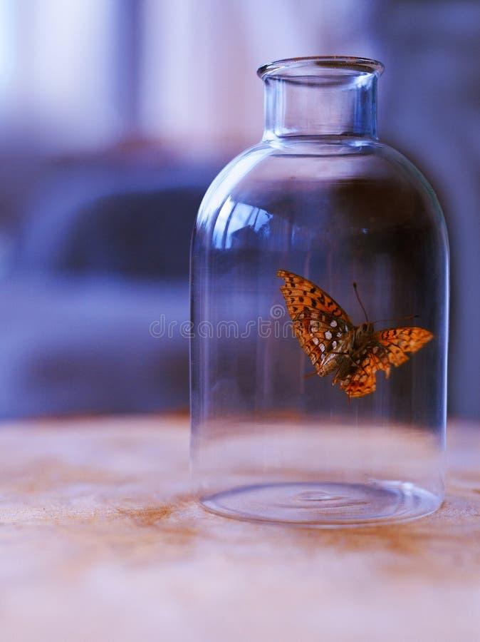 Farfalla in una bottiglia fotografia stock libera da diritti
