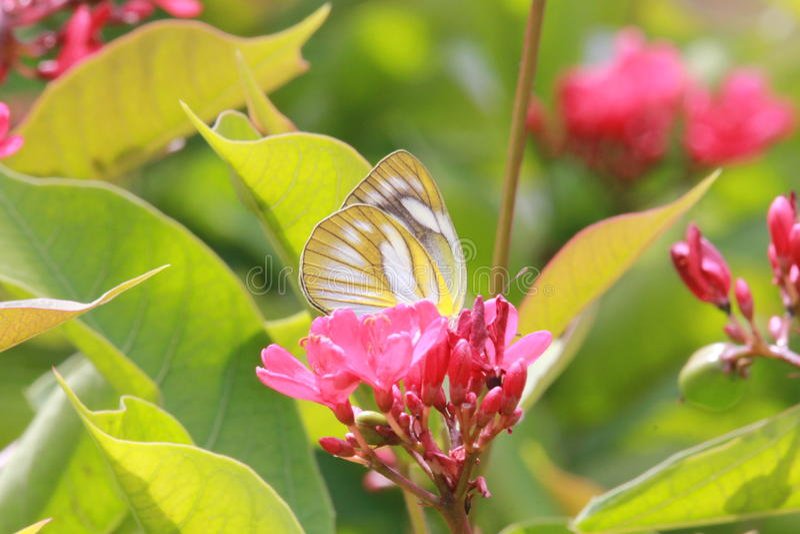 Farfalla variopinta sul fiore variopinto immagine stock libera da diritti