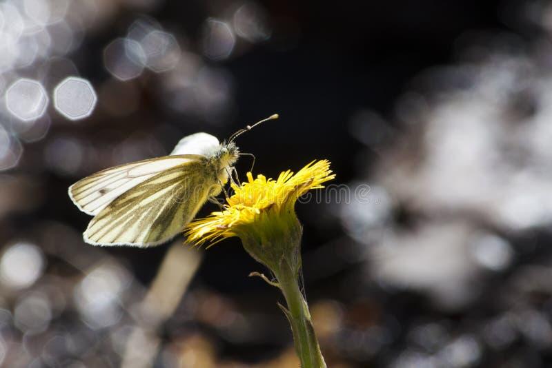 Farfalla vicino alla corrente con bokeh fotografie stock libere da diritti