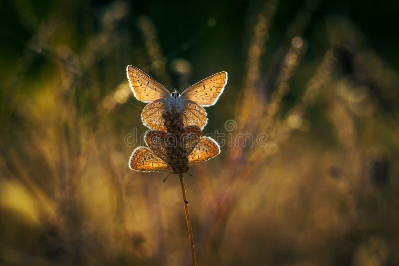 Farfalle alla luce fotografie stock libere da diritti