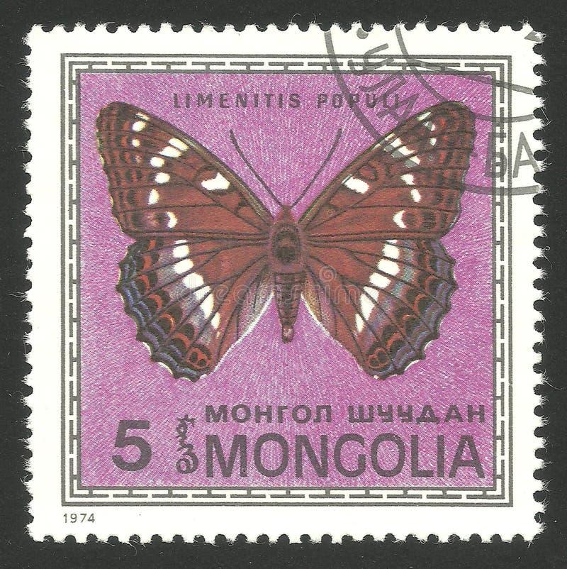 Farfalle, ammiraglio del pioppo fotografia stock libera da diritti