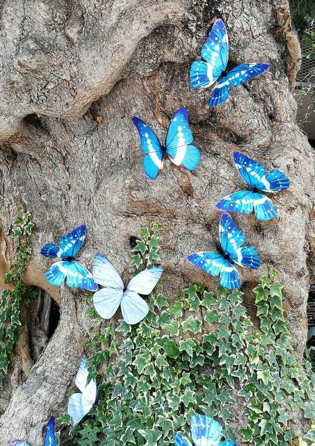 farfalle blu in albero fotografia stock
