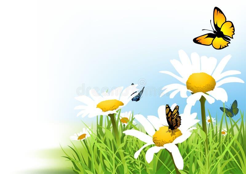 Farfalle e margherita illustrazione vettoriale
