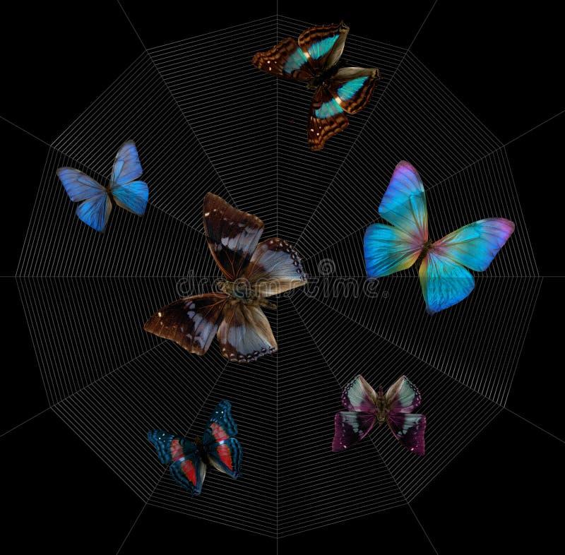 Farfalle e ragnatela illustrazione di stock