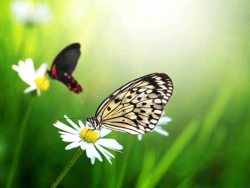 Farfalle Esotiche Fotografia Stock