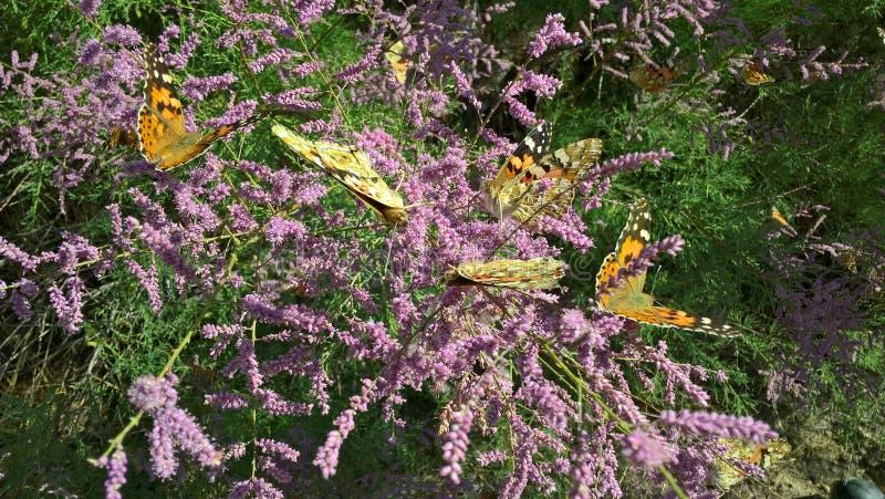Farfalle a giugno fotografia stock libera da diritti