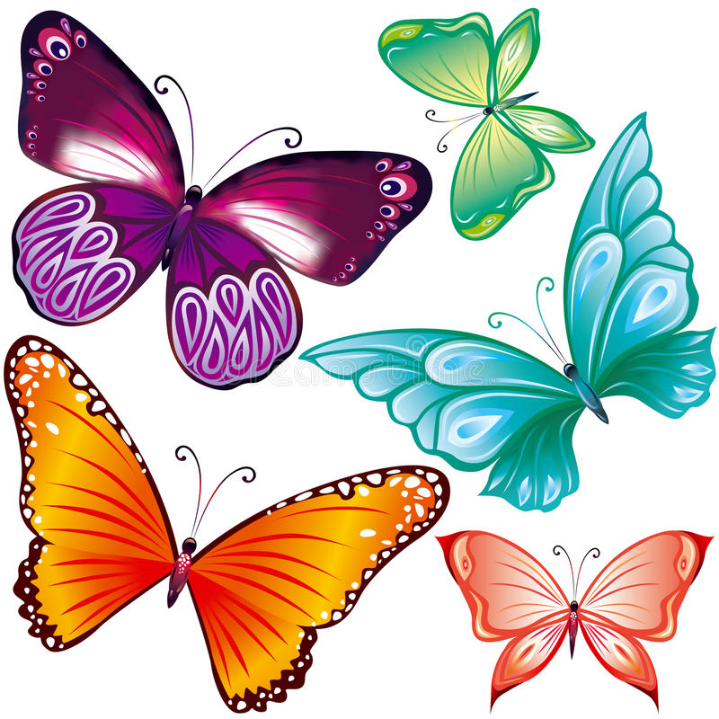 Farfalle impostate fotografia stock libera da diritti
