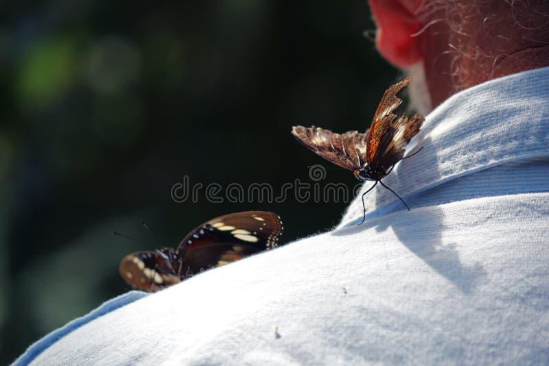 Farfalle su un uomo anziano fotografia stock libera da diritti