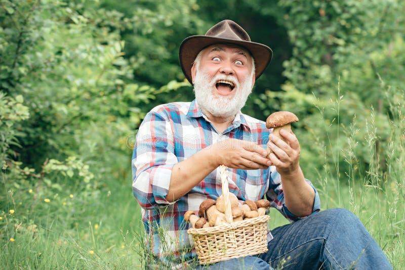 Farfar med korgen av champinjoner och ett förvånat ansiktsuttryck Champinjon i skogen, samla för hög man royaltyfri fotografi