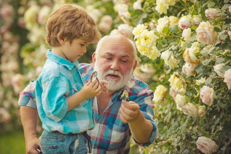 Farfar och sonson gammalt barn Begrepp av en pensionsålder ( H?g tr?dg?rdsm?stare barn arkivfoto