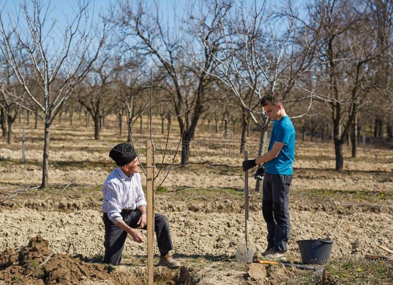 Farfar och sonson som tillsammans planterar ett träd fotografering för bildbyråer