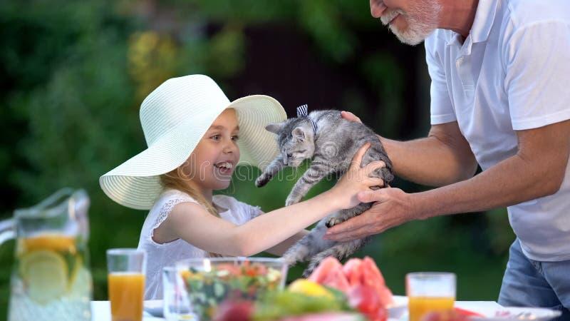 Farfar som framlägger katten till den lyckliga flickan i hatten, överraskninggåva, förväntan royaltyfri foto