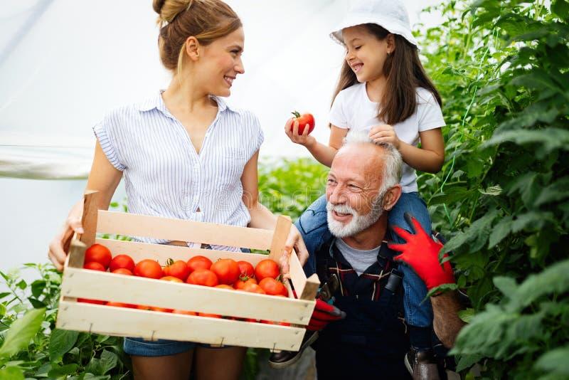 Farfar som v?xer organiska gr?nsaker med barnbarn och familjen p? lantg?rden royaltyfri fotografi