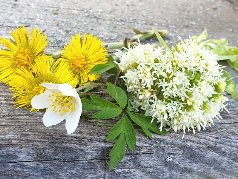 Farfara Tussilago, albus Petasites, nemorosa ветреницы, цветет стоковые изображения rf