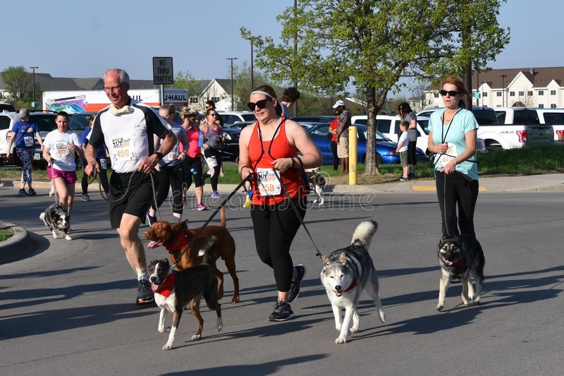 Dogs race at the Fargo Dog Race royalty free stock photos