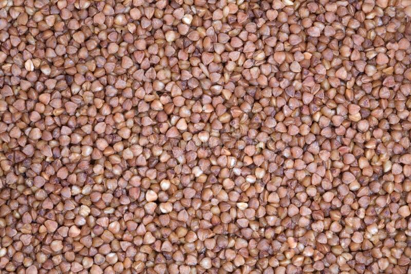 Farina di grano saraceno che si trova uno strato uguale fotografia stock libera da diritti